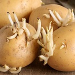 Сажать картошку во сне: к чему снится посадка в землю по соннику?