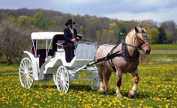 Сонник: к чему снится кататься, ездить верхом и скакать на лошади во сне?