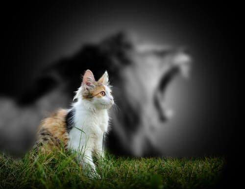 Причина, почему кошки не рычат как львы