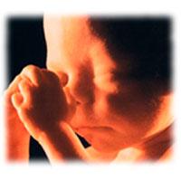 24 неделя беременности что происходит с тобой и плодом — Евромедклиник