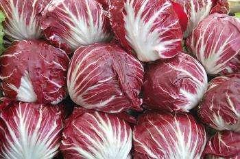 Салат радичио – его полезные свойства и калорийность; рецепты блюд